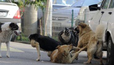 câinii comunitari